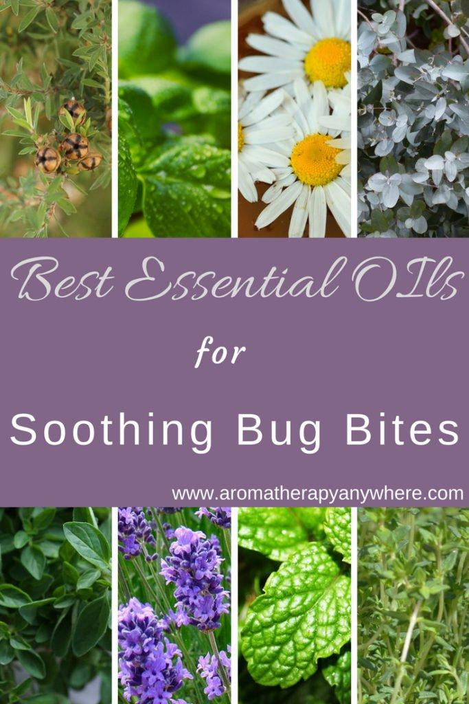 Best Essential Oils for Soothing Bug Bites