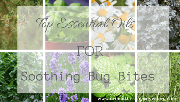 Top Essential Oils for Soothing Bug Bites