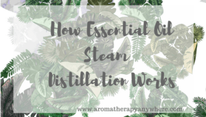 How Essential Oil Steam Distillation Works