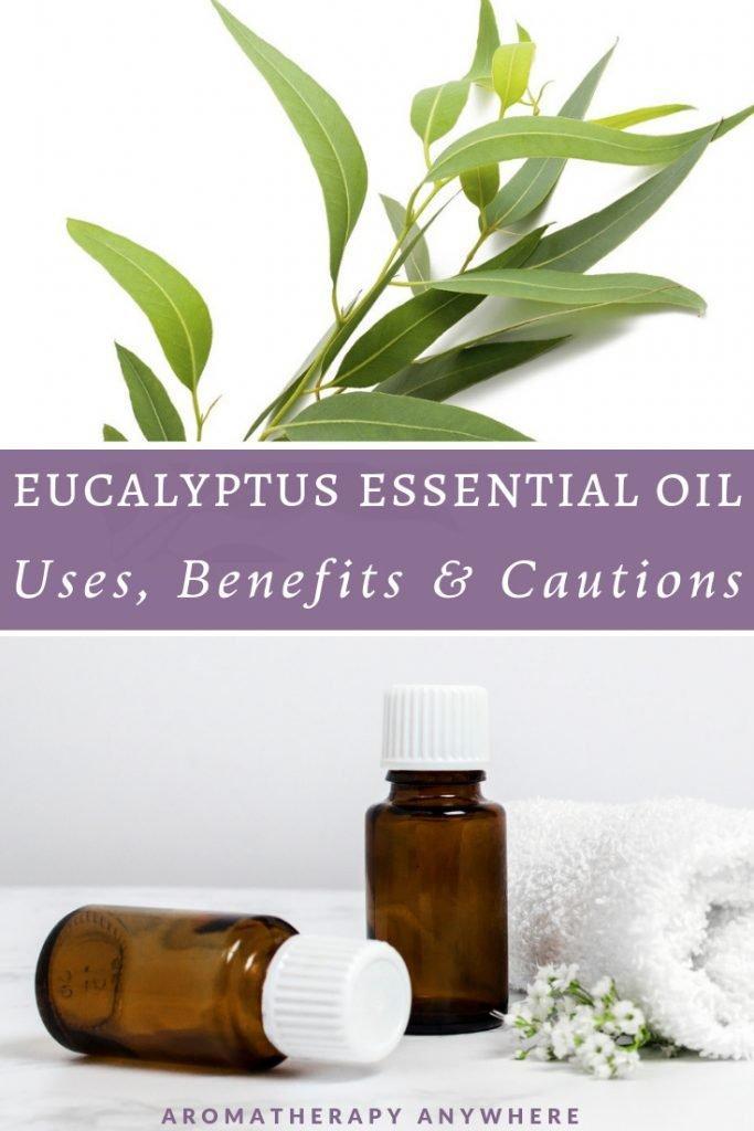 Eucalyptus Leaves+ Essential Oil Bottles