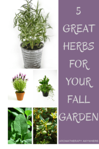 Best herbs to grow in fall