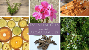 Essential Oils & Their Aroma Families
