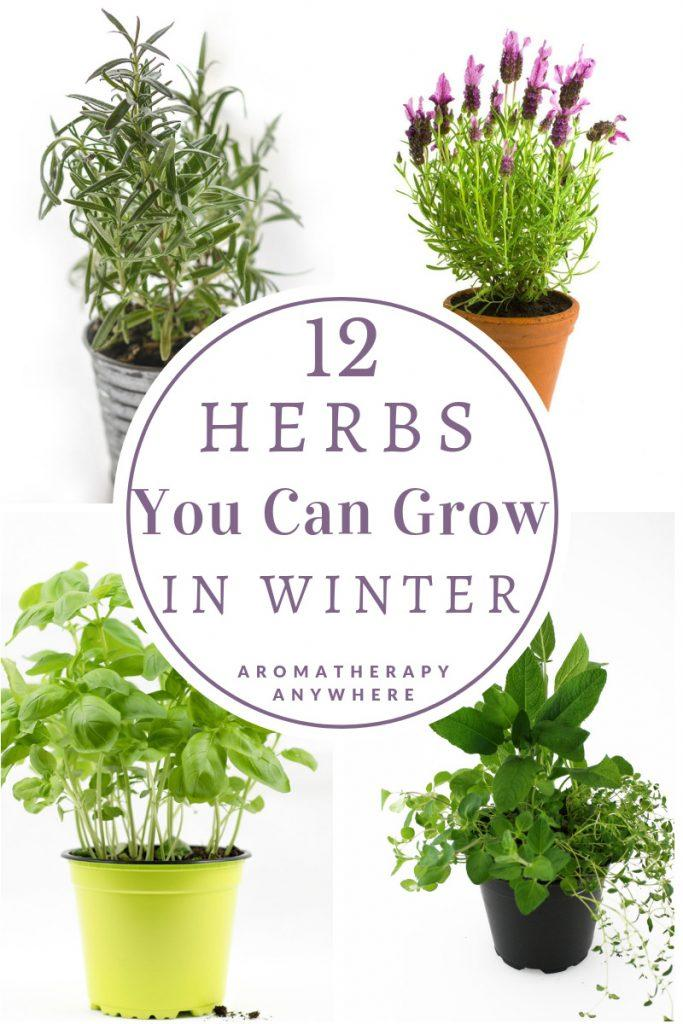 12 Herbs to grow in Winter