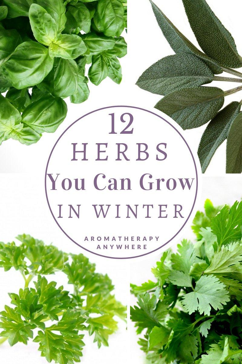 12 Herbs you can grow in Winter