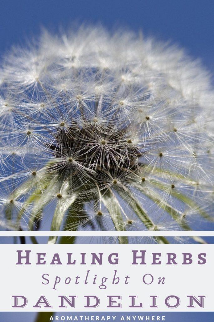 Healing Herbs-Dandelion
