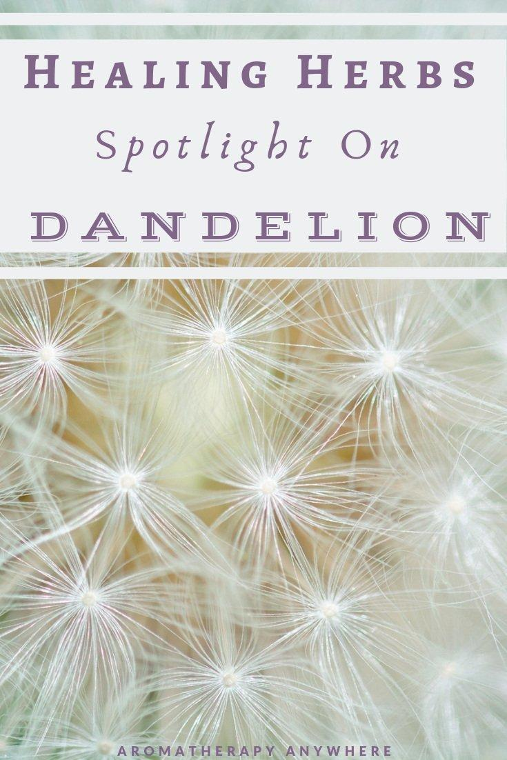 Therapeutic Properties of Dandelion