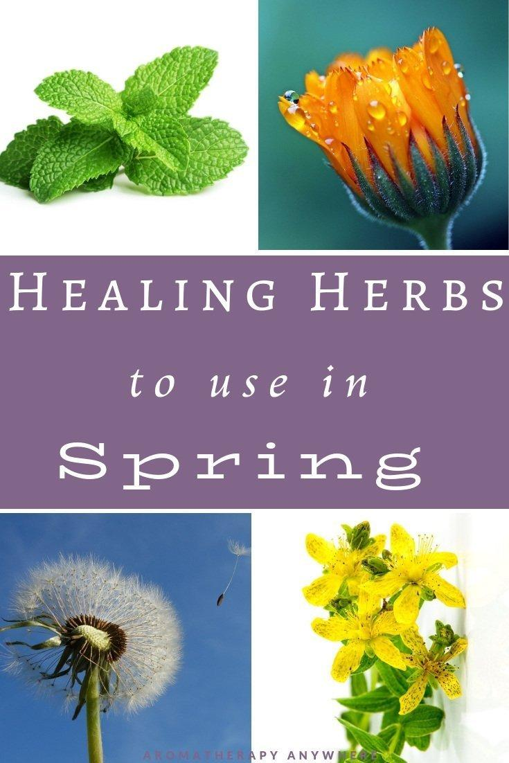 Use these Healing Herbs in Spring