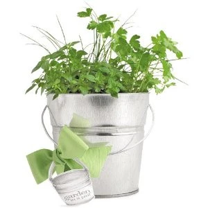 garden in a pail with herbs